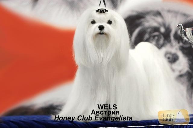 Honey Club Evangelista
