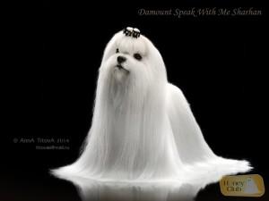 Damount Speak With Me Sharhan